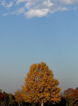 071121_autumn_colors.JPG