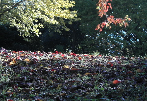 071122_autumn_colors.JPG