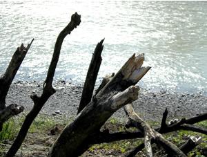 071130_dead_tree.jpg