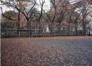071202_after_the_rain.jpg