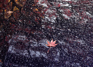 071203_red_leaves.jpg