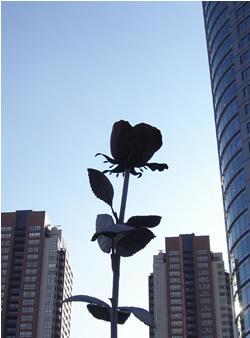 071204_red_rose.jpg