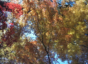 071206_autumn_colors.JPG