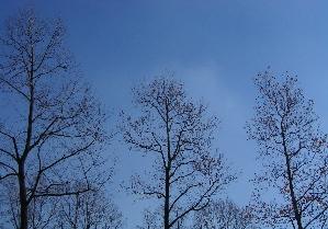 071208_trees.JPG