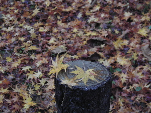 071210_autumn_leaves.JPG