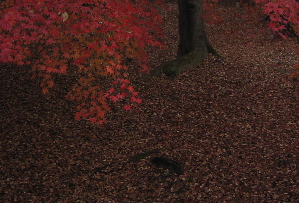 071211_autumn_leaves.JPG