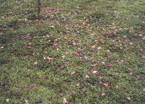 071212_autumn_leaves.JPG