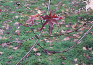 071213_autumn_leaves.JPG