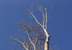 071227_winter_tree.JPG
