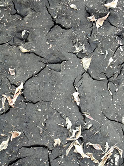 080107_dried_mud.jpg
