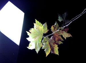 080110_night_leaves.jpg