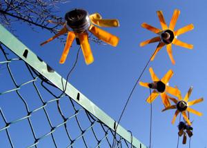 080115_sunflower.jpg