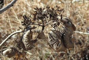 080201_withered_flower.jpg