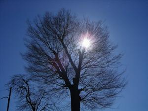 080217_winter_tree.jpg