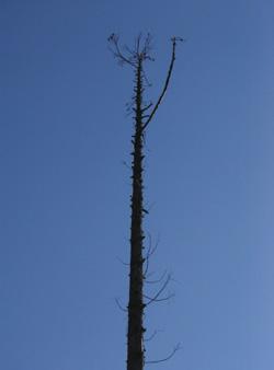 080227_tree.jpg