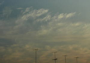 080301_dragonflies.jpg