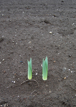 080320_sprouts.jpg
