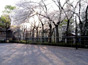 080403_sakura_ground.jpg