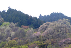 080416_spring_mountain.jpg