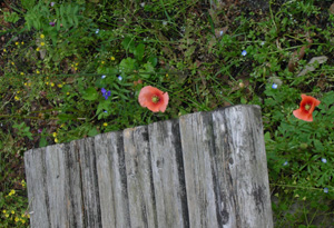 080422_flower_base.jpg