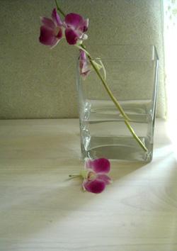 080503_fallen_flower.jpg