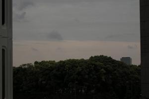 080512_urban_forest.jpg