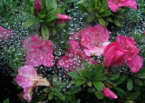 080530_rain_drops.jpg