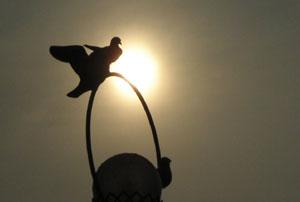 080607_pigeons.jpg