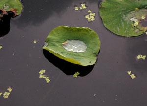080621_leaf_boat.jpg