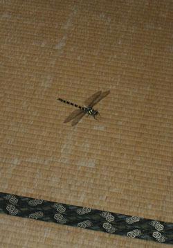 080723_dragonfly.jpg