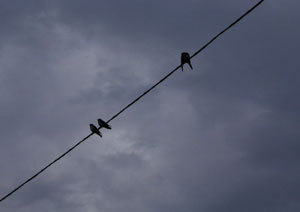 080724_swallows.jpg