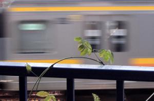 080727_train.jpg