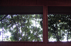080730_forest.jpg