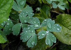080804_rain_drops.jpg