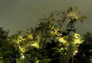 080820_night_trees.jpg