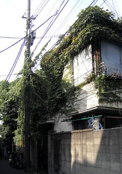 080906_green_house.jpg