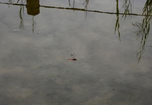 080922_red_dragonfly2.jpg
