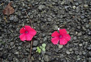 080929_flowers.jpg