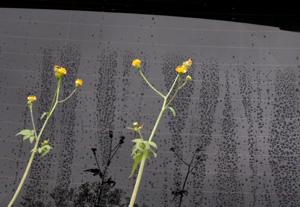 081006_rainy_flowers.jpg