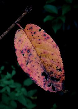 081007_leaf.jpg
