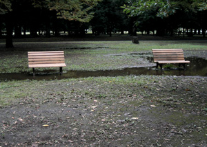 081014_two_benches.jpg