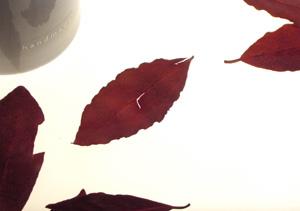 081020_leaves.jpg