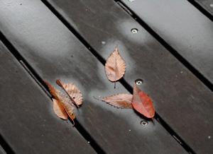 081023_fallen_leaves.jpg