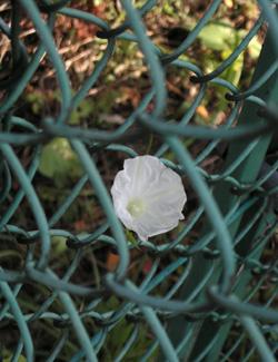 081028_flower.jpg