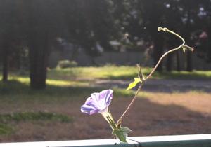 081030_flower.jpg