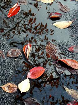 081117_leaves.jpg