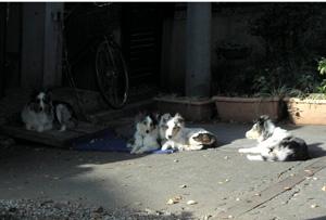 081122_dogs.jpg