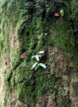 081124_green.jpg