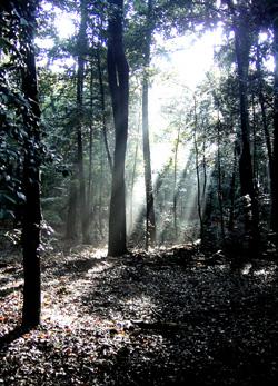 081129_urban_forest_a.jpg
