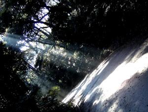 081129_urban_forest_b.jpg